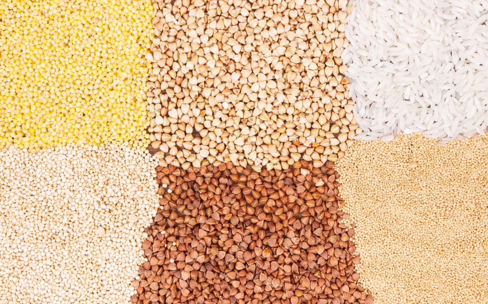 Les alternatives au blé pour un régime sans gluten. © ratmaner, Fotolia