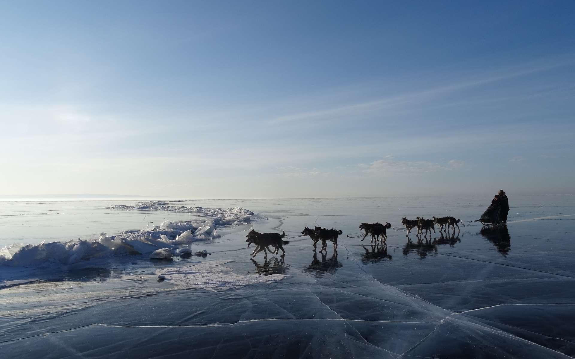 L'Odyssée sauvage durant la dernière journée : le traîneau glisse sur la glace cristalline du lac Baïkal. Les chiens doivent trouver leur équilibre... © Taïga