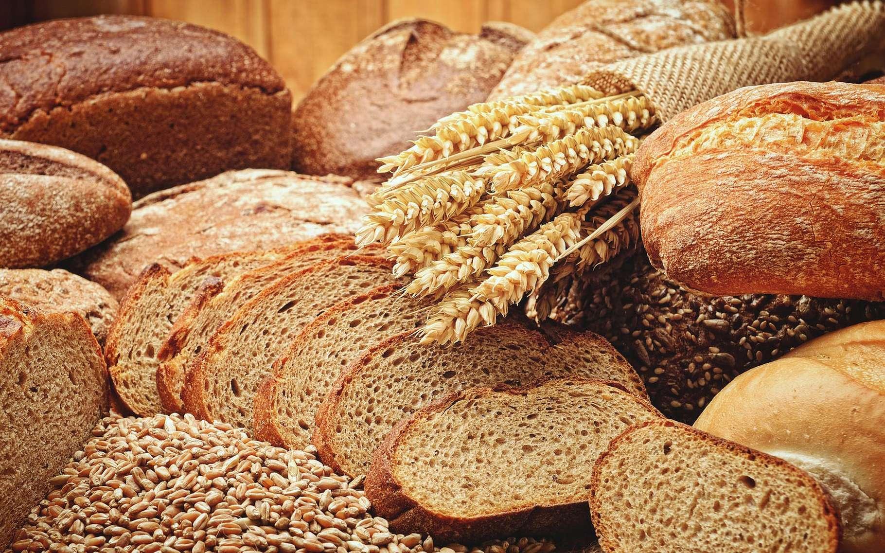 Pain aux céréales, pain au seigle, pain à l'épeautre ou encore pain complet, pain blanc ou pain au levain. Il existe presque une infinie variété de pains. Certains se distinguent par leurs ingrédients, d'autres plus largement par leurs recettes de fabrication ou encore par leurs formes. Et bien sûr, par leur goût, tantôt acide ou fruité, tantôt marqué par les céréales.Chaque pain — ou presque — présente des qualités nutritionnelles qui lui sont particulières. Certains affichent des indices glycémiques plus faibles que d'autres. D'autres sont plus riches en minéraux ou en fibres. D'autres sont bien plus digestes.Et si en France, la baguette fait figure de tradition, d'autres pays sont aussi connus pour leur attirance pour le pain. Rien qu'en Europe, on en consomme chaque année plus de 30 millions de tonnes. Pour un marché mondial qui ne cesse de croitre. © aureliofoxrj, Pixabay, CC0 Creative Commons