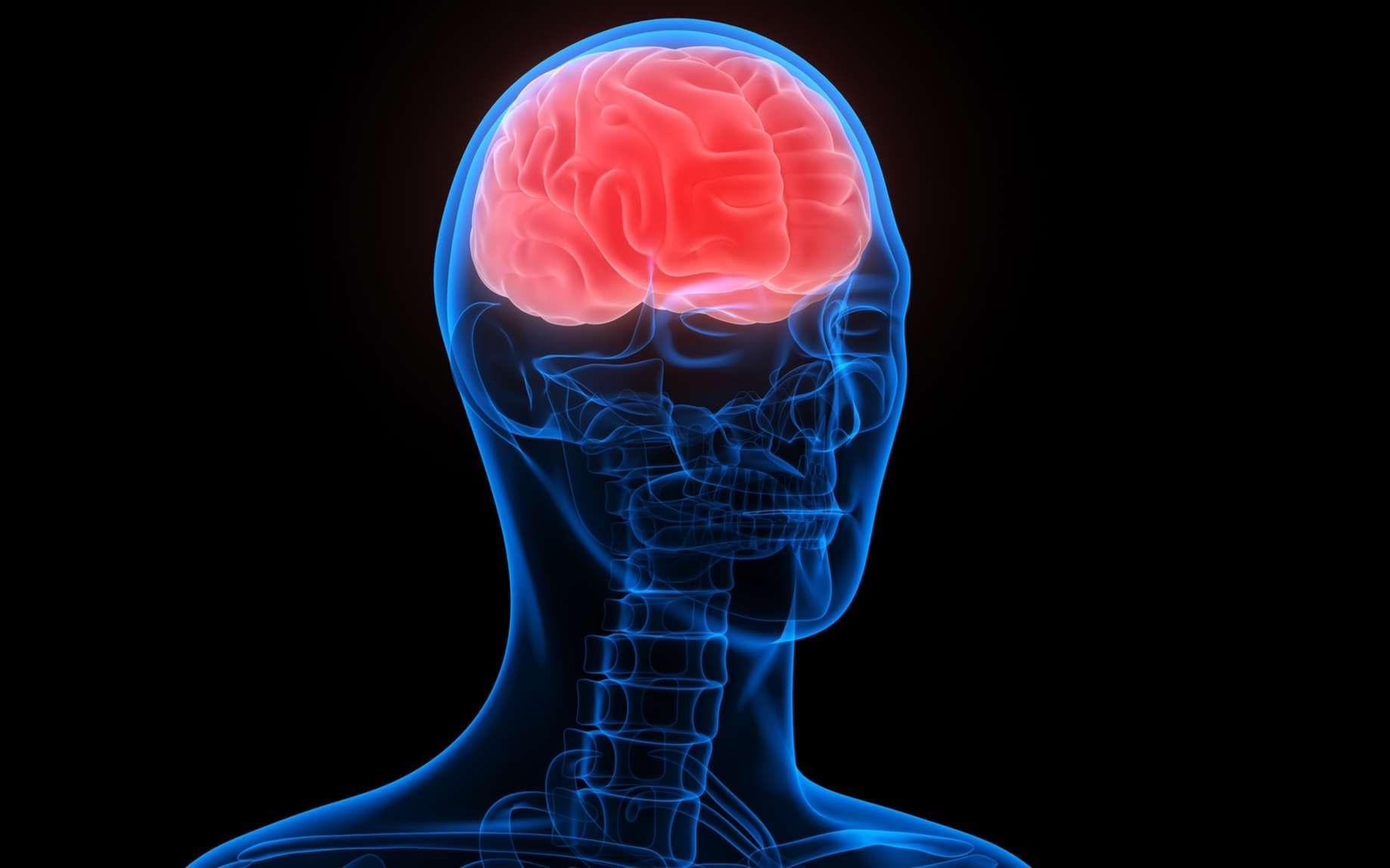 Le cortex moteur permet le mouvement volontaire. © magicmine, Fotolia