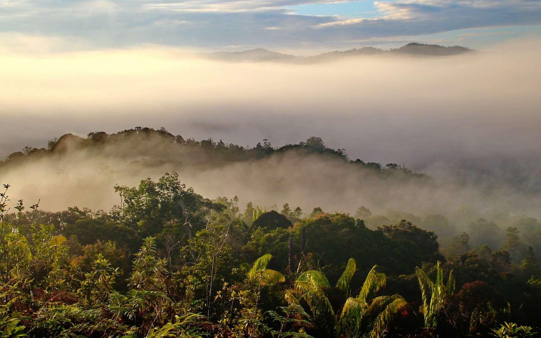 Les fourmis kamikazes de Bornéo vivent dans la canopée de la forêt. © labanglonghouse, Pixabay, CC0 Creative Commons