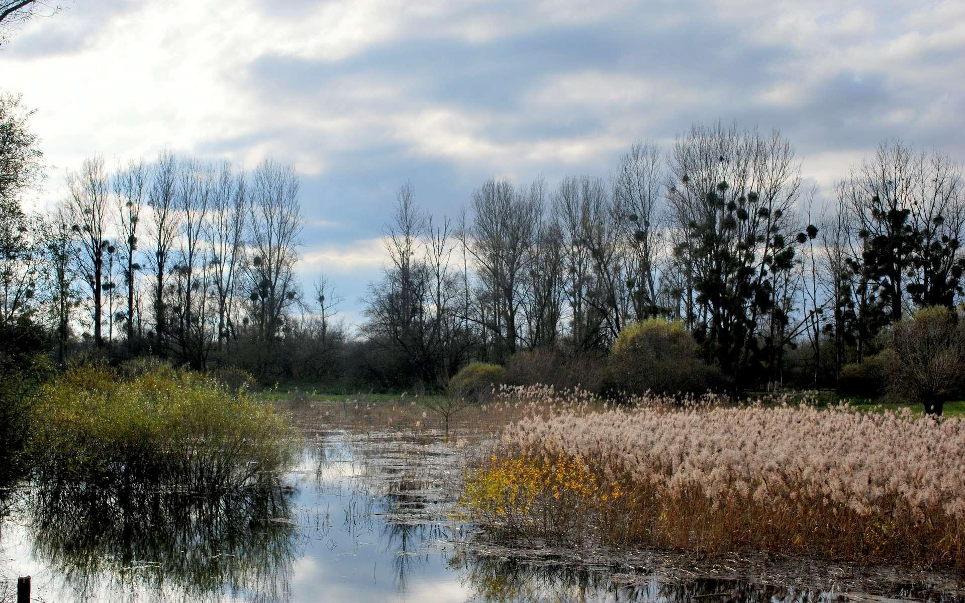 Réserve naturelle de l'île du Girard (Jura): la roselière depuis la digue. © Dole Environnement, Wikimedia Commons, CC by-sa 3.0