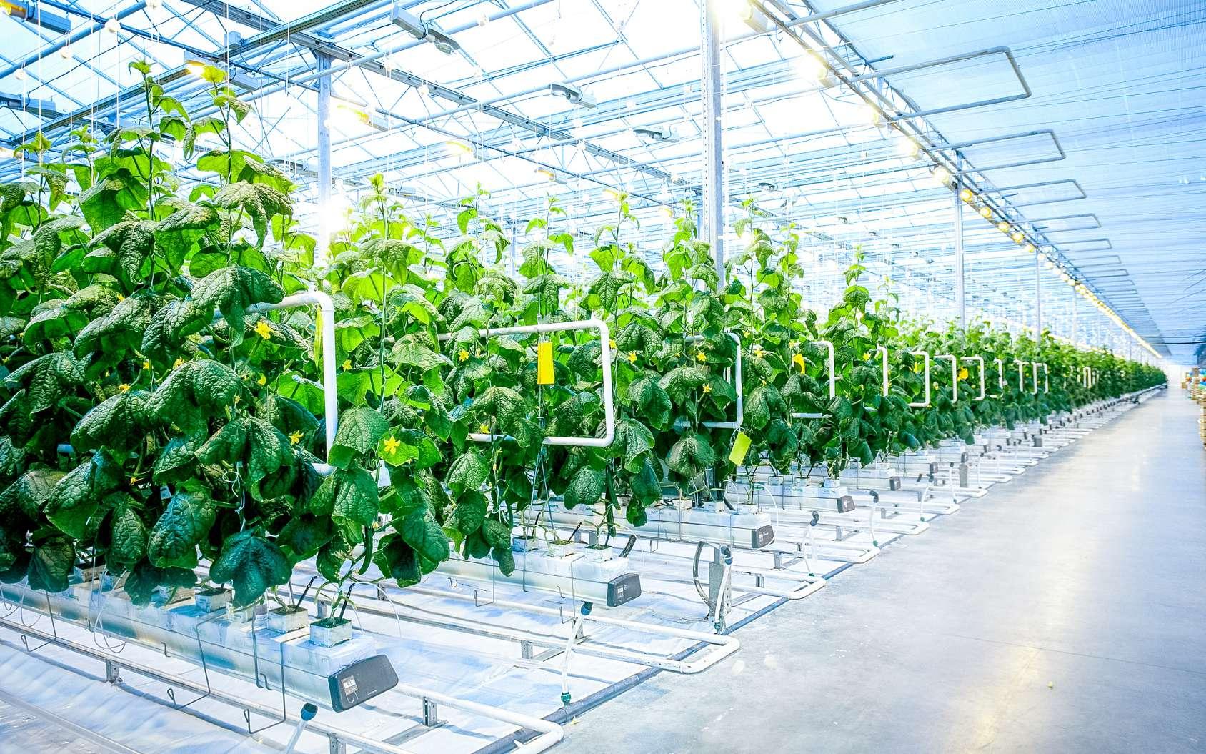 La première ferme entièrement automatisée des États-Unis sera installée dans l'Ohio. © 279photo, Fotolia