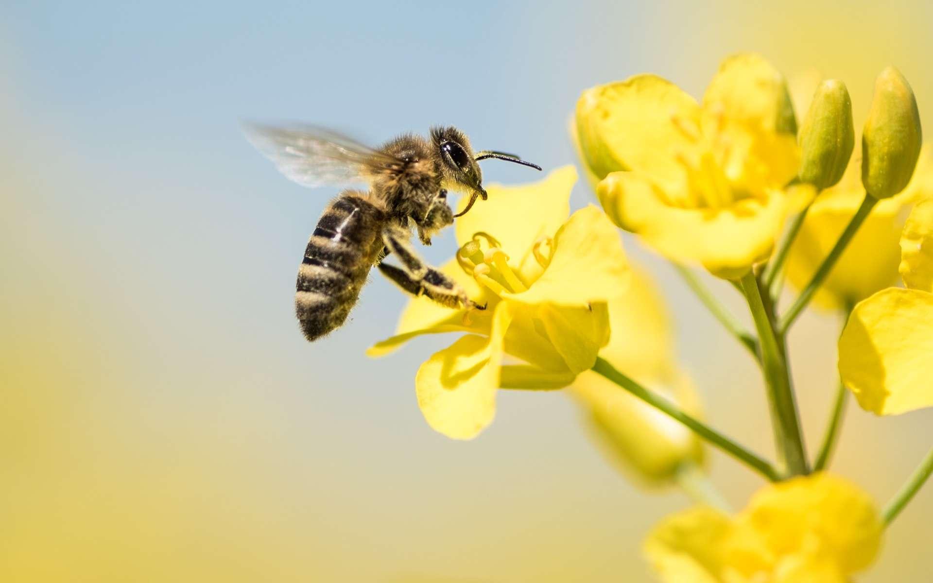 Certains pesticides persistent longtemps après leur interdiction et continuent de tuer les abeilles. © K. Thalhofer, Adobe Stock