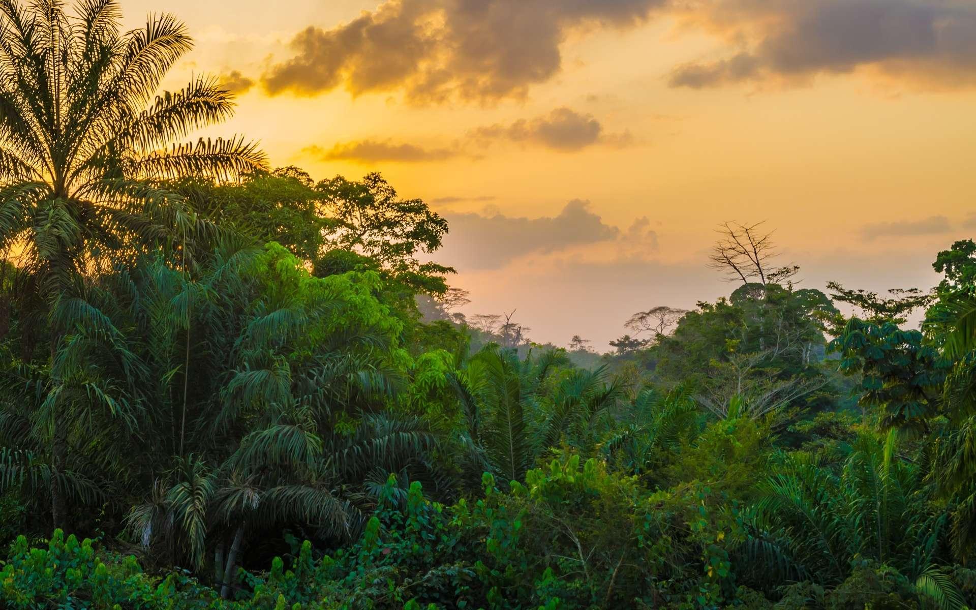 Une forêt tropicale au Libéria, Afrique de l'Ouest. © Fabian, Adobe tock