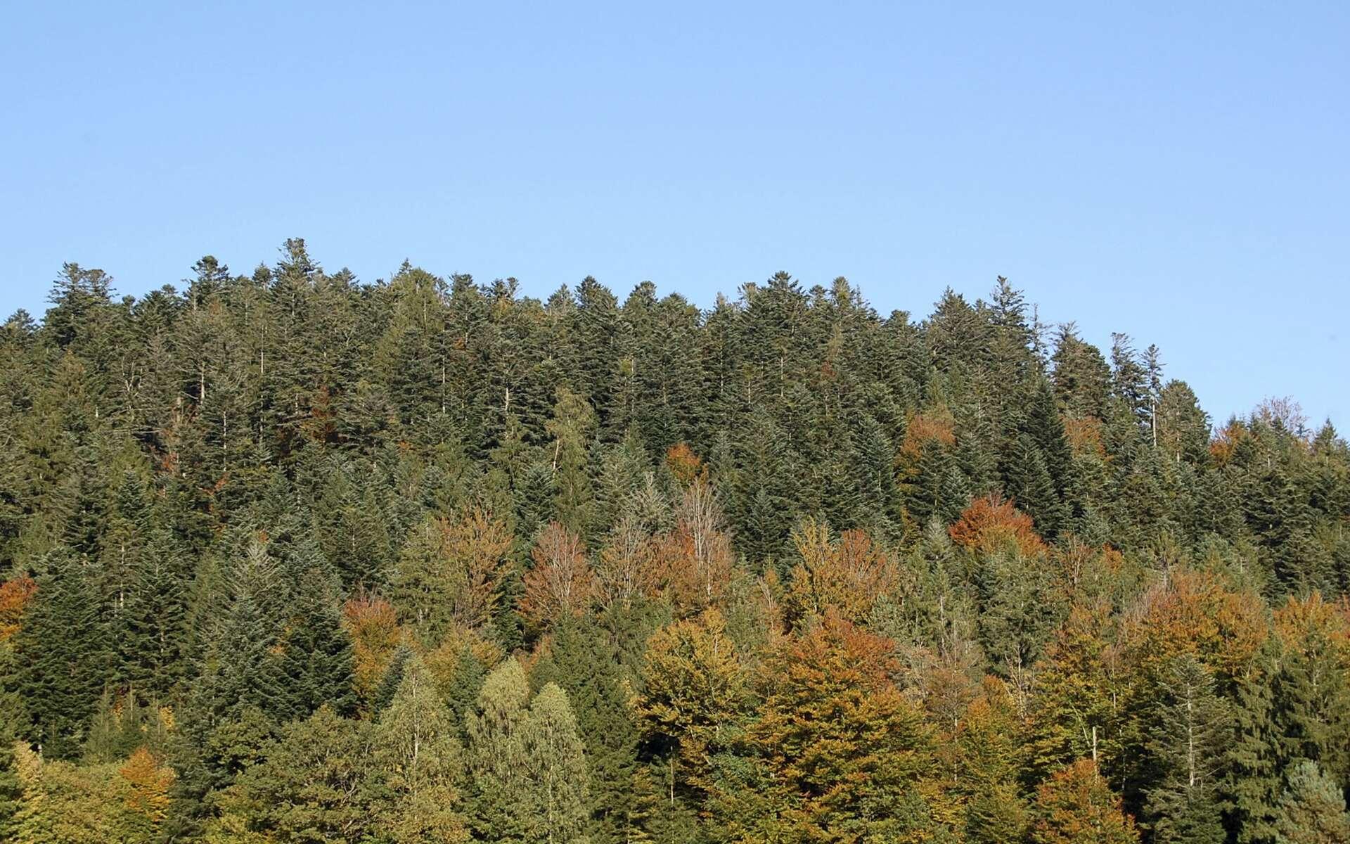 Paysage de la forêt des Vosges. © Sapin88, Wikimedias Commons, CC by-sa 3.0