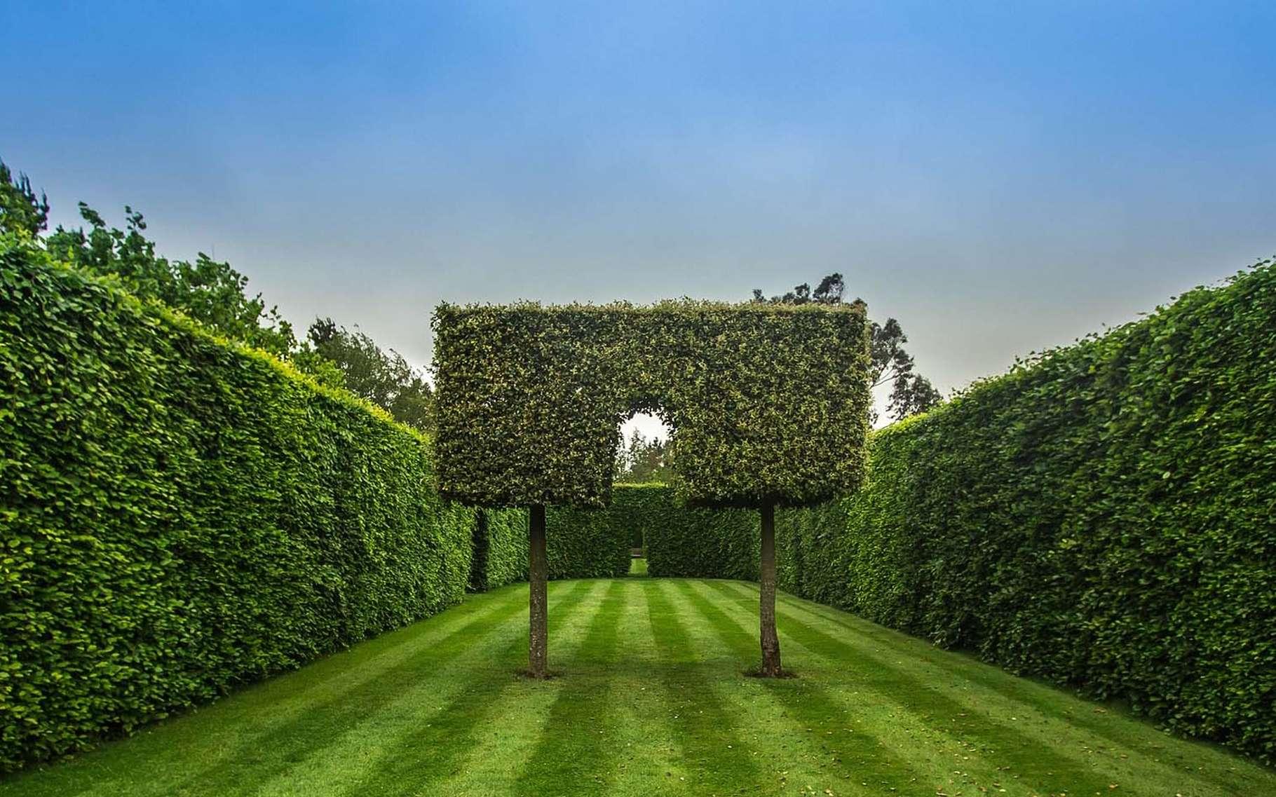 Une magnifique haie de jardin. © Diego Torres, Pixabay, DP