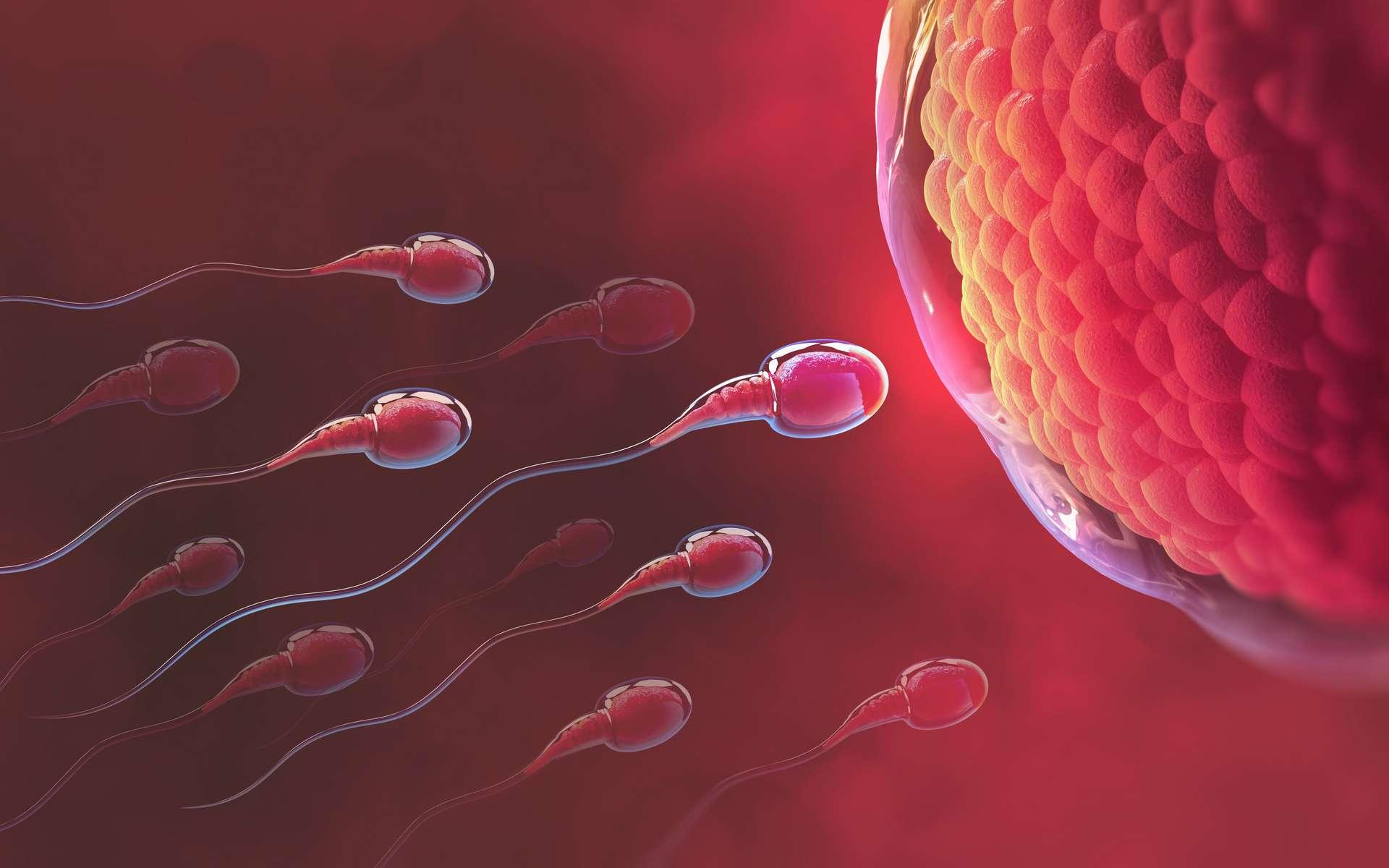 Le spermatozoïde gagnant avait sans doute l'antidote - Futura