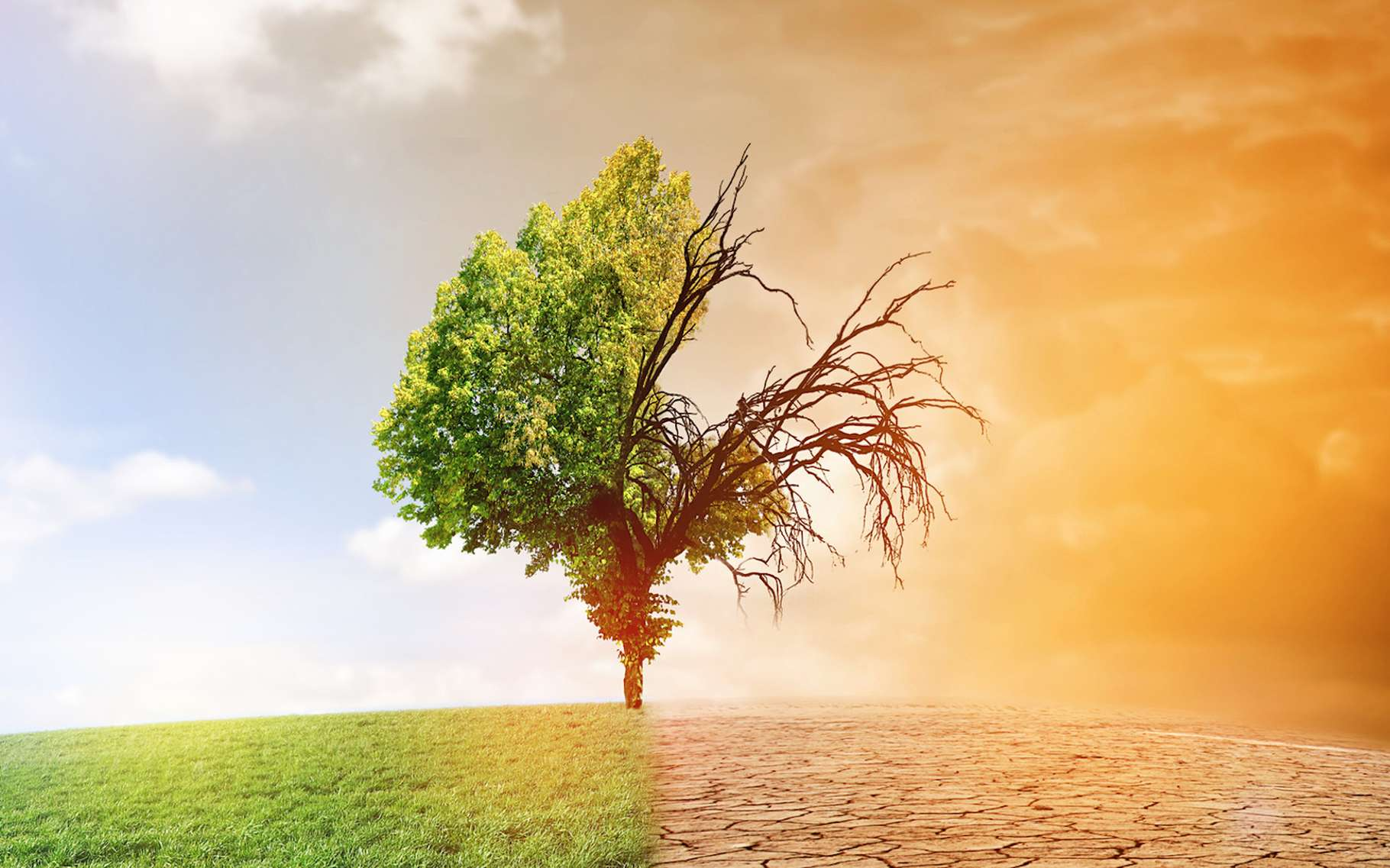 Les conséquences d'un changement climatique s'annoncent nombreuses, tant pour notre planète que pour nos sociétés. © jozsitoeroe, Fotolia
