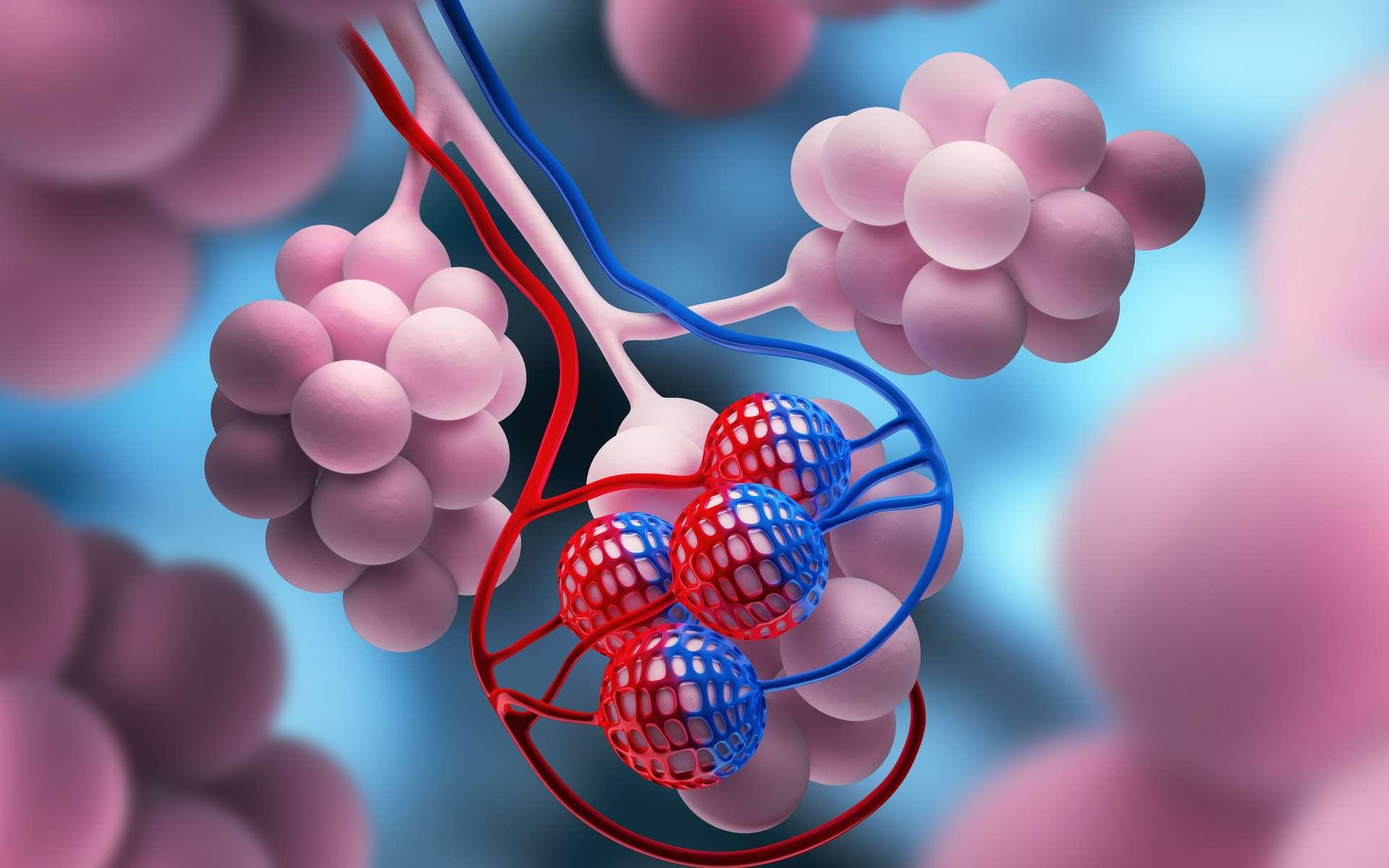 En utilisant des organoïdes, des scientifiques parviennent à identifier des médicaments prometteurs contre le SARS-CoV-2. © peterschreiber.media, Adobe Stock
