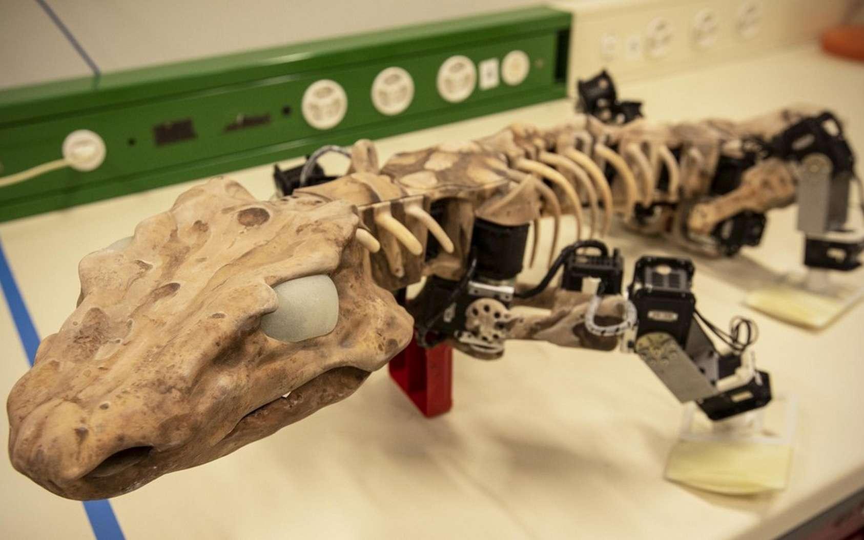 L'OroBOT a été conçu à partir des informations recueillies du squelette et des traces de pas fossilisés de l'Orobates pabsti. © 2019 Maxime Marendaz