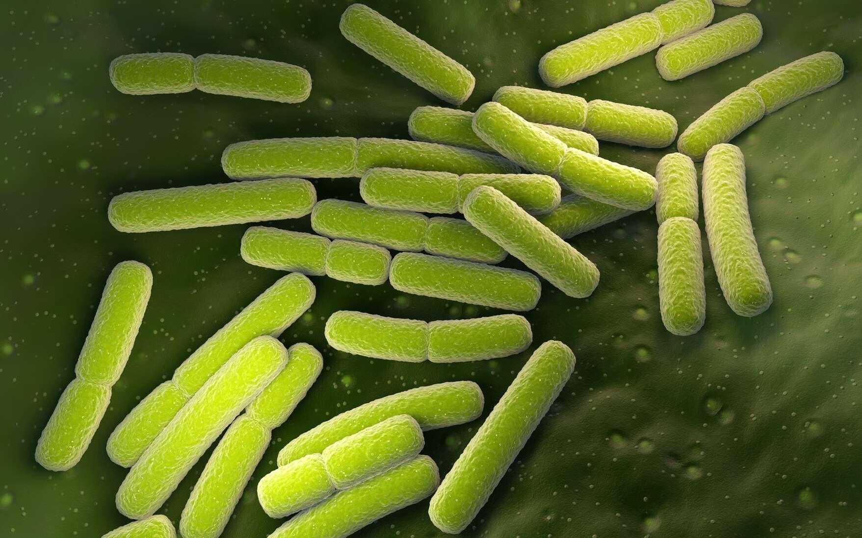 L'augmentation de l'utilisation des antibiotiques fait peur aux médecins américains. © Kateryna_kon, Adobe Stock