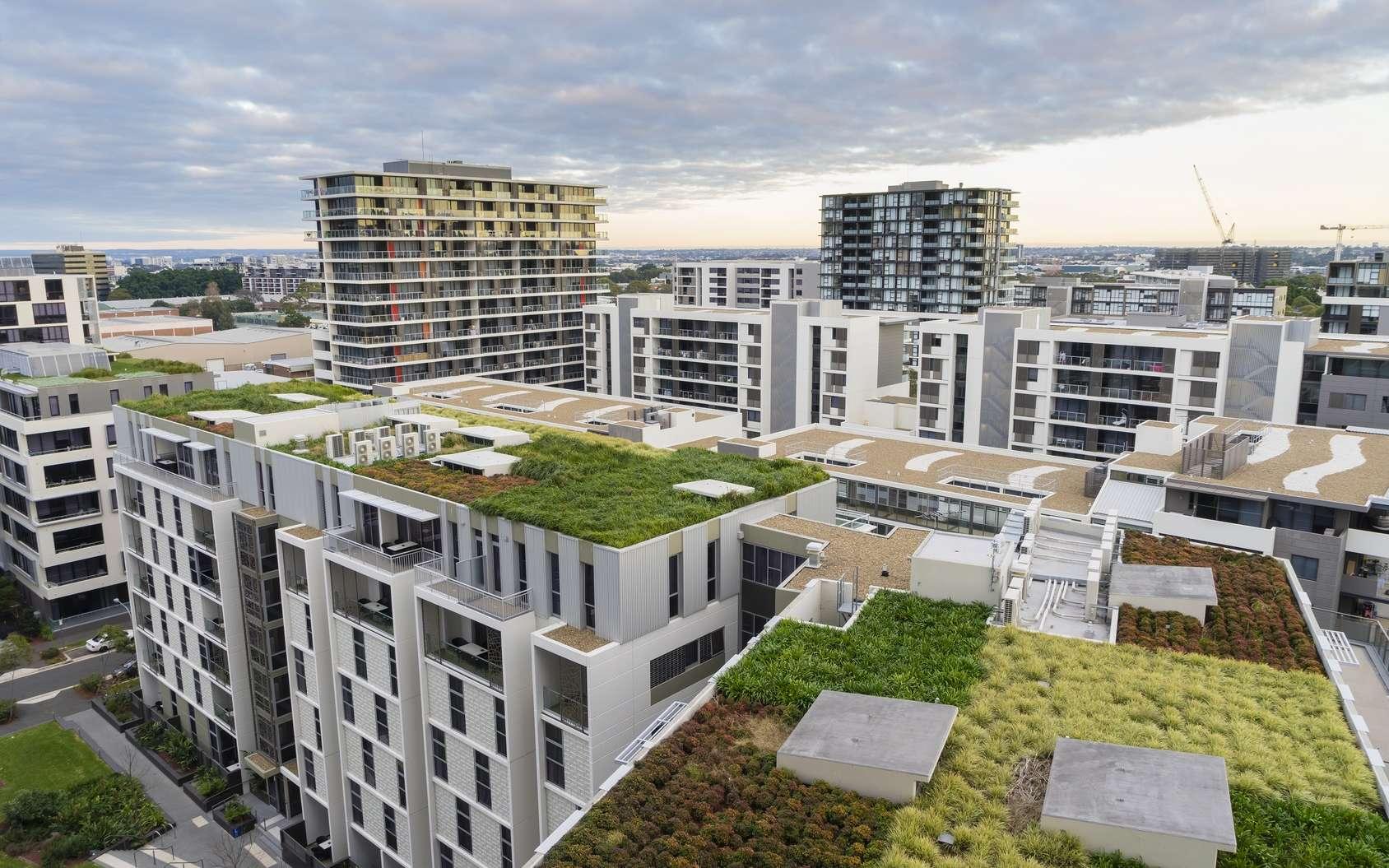 Les toits végétalisés ont de nombreux avantages. Ils participent par exemple à l'isolation du bâtiment. © sunflowerey, Fotolia