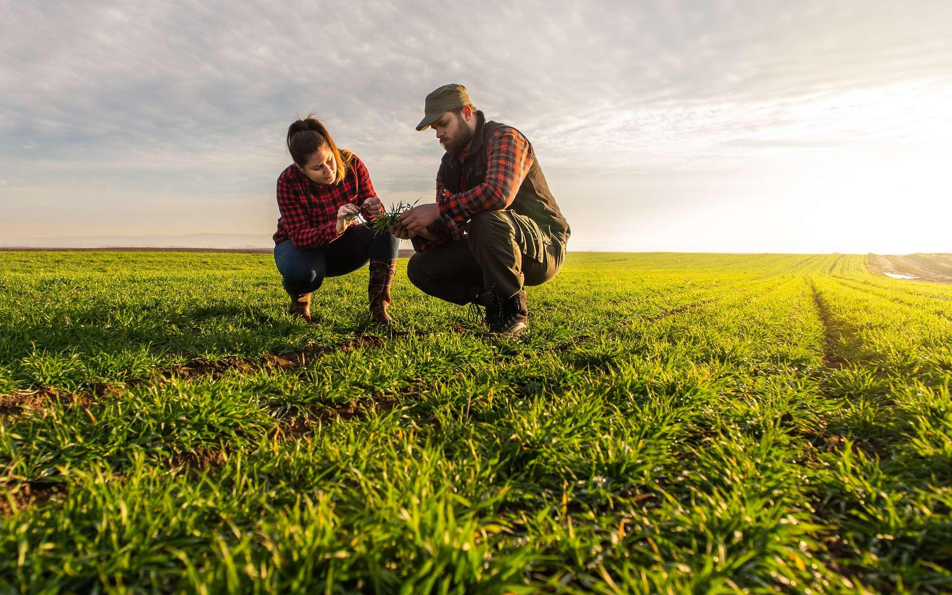 Les métiers de l'agriculture sont à découvrir entre le 2 et le 6 novembre. © Dusan Kostic, Adobe Stock