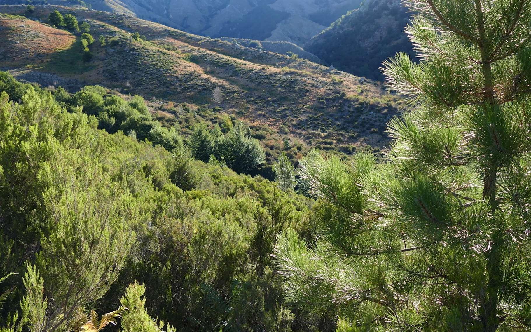 En Corse, le maquis est particulièrement présent. © pipobimbo, Fotolia