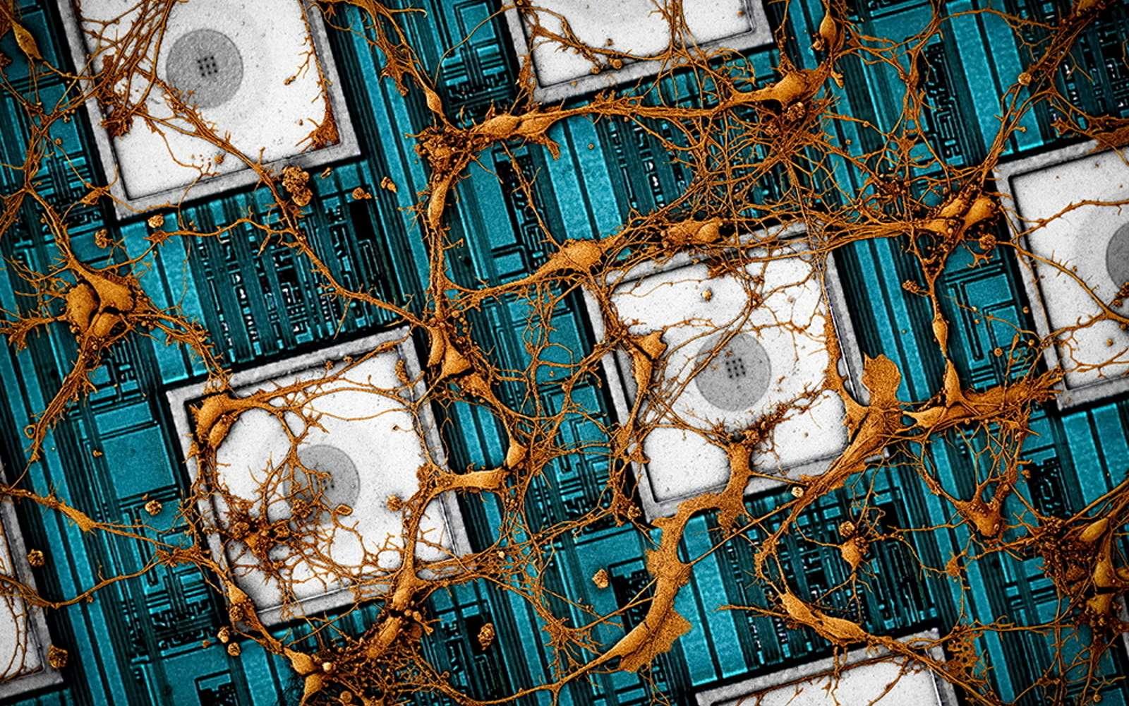 Une image de neurones de rat sur un réseau de nanoélectrodes. © Samsung