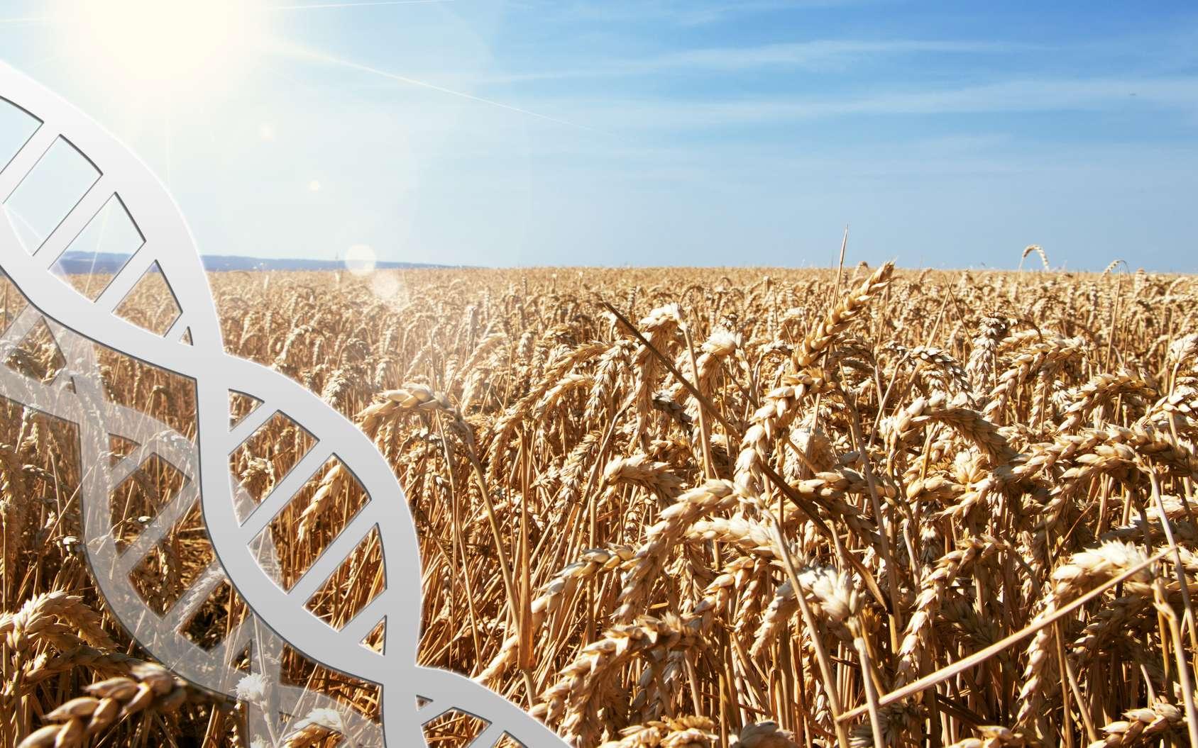 Face aux défis du réchauffement climatique et de la population humaine grandissante, les OGM sont une des réponses fiables que l'on devra mettre en œuvre. © Juliane Franke, Fotolia