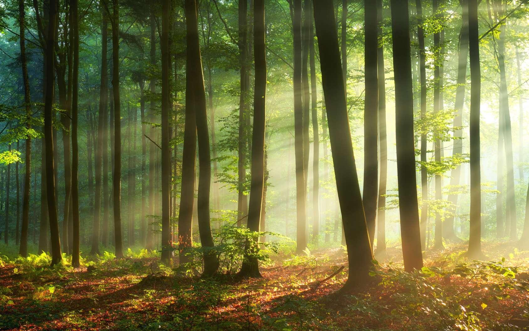 Les arbres contribuent largement à combattre le réchauffement climatique, pourtant plus de 40 % des espèces d'arbres sont menacées d'extinction. © Kwasny221, Fotolia