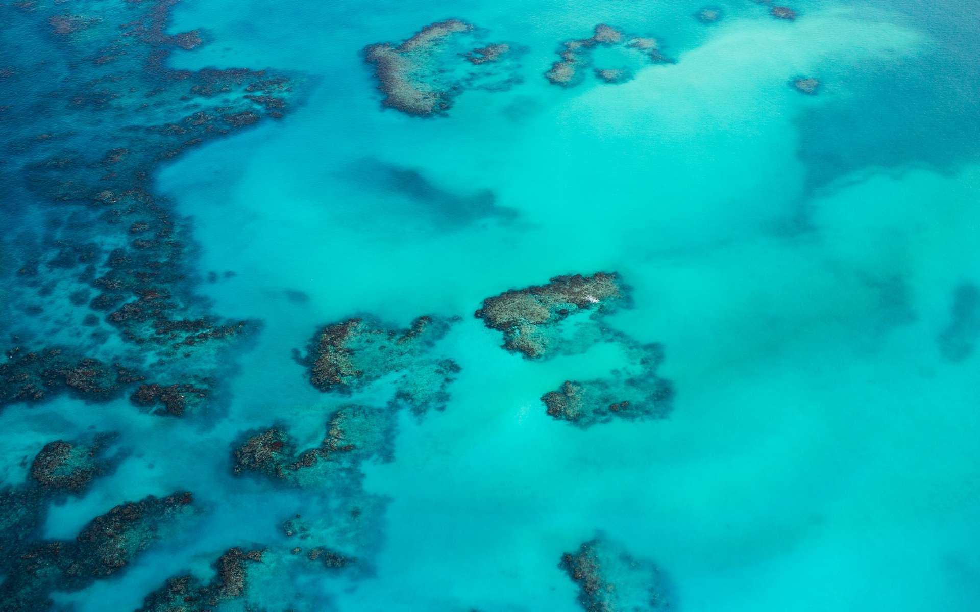 La Grande Barrière de corail montre des signes de résilience au réchauffement. © Romello Williams, Unsplash
