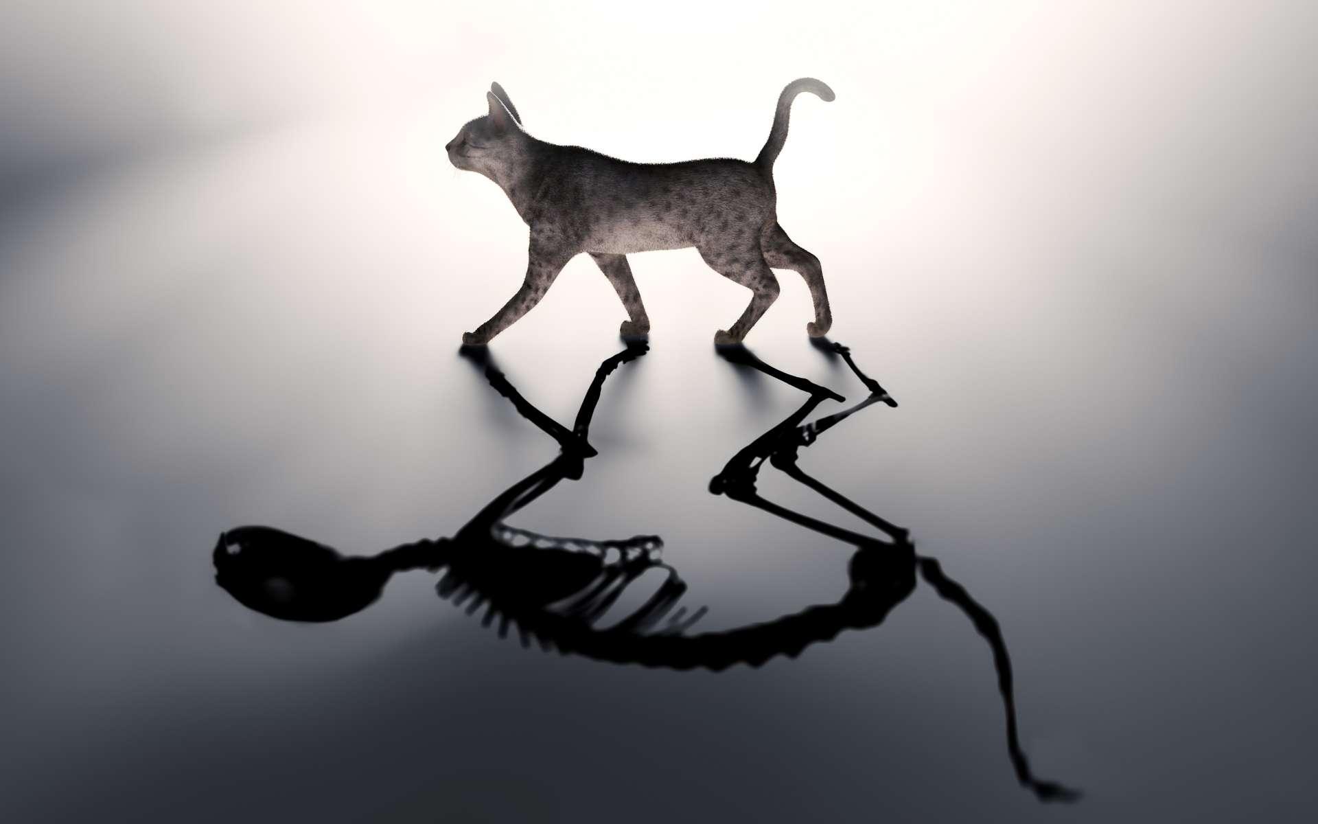 Une métaphore du chat de Schrödinger dans un état de superposition quantique où il est à la fois mort et vivant. © Mopic, Shutterstock