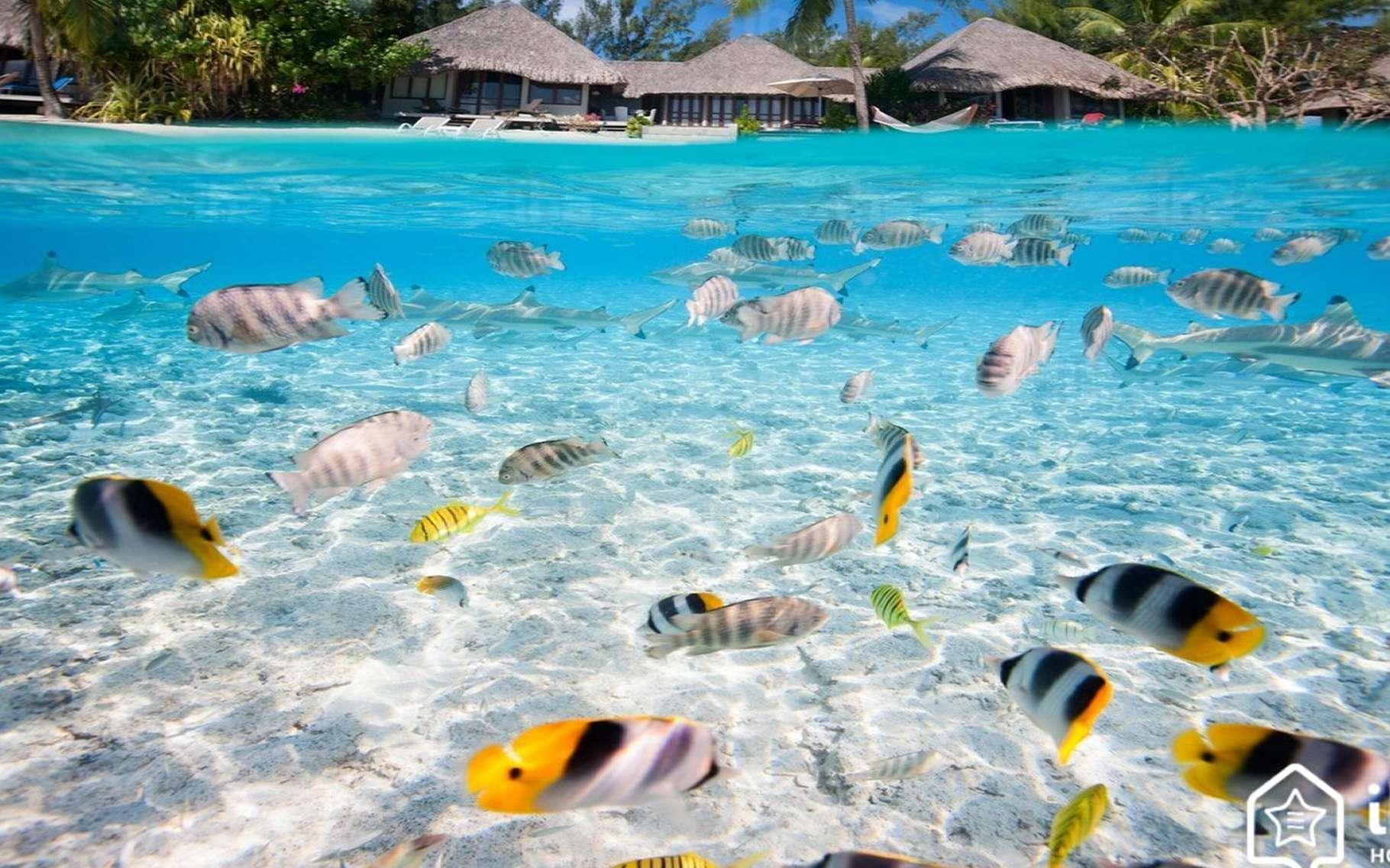 Lagon à Tahiti. © Iha