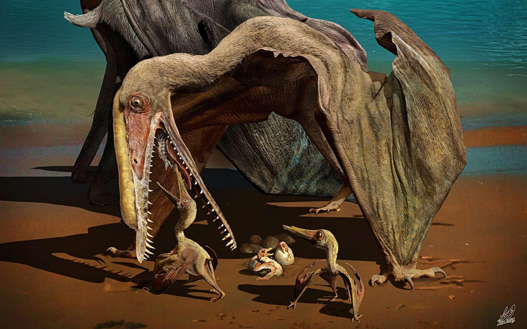 Des œufs de ptérosaures ont été découverts en Chine. Le ptérosaure (Hamipterus tianshanensis) est ici magnifiquement représenté, avec une crête sur le sommet de la partie avant du crâne. L'un est un mâle et l'autre une femelle, protégeant sa couvée. Une scène possible de la vie au Crétacé inférieur. © Chuang Zhao