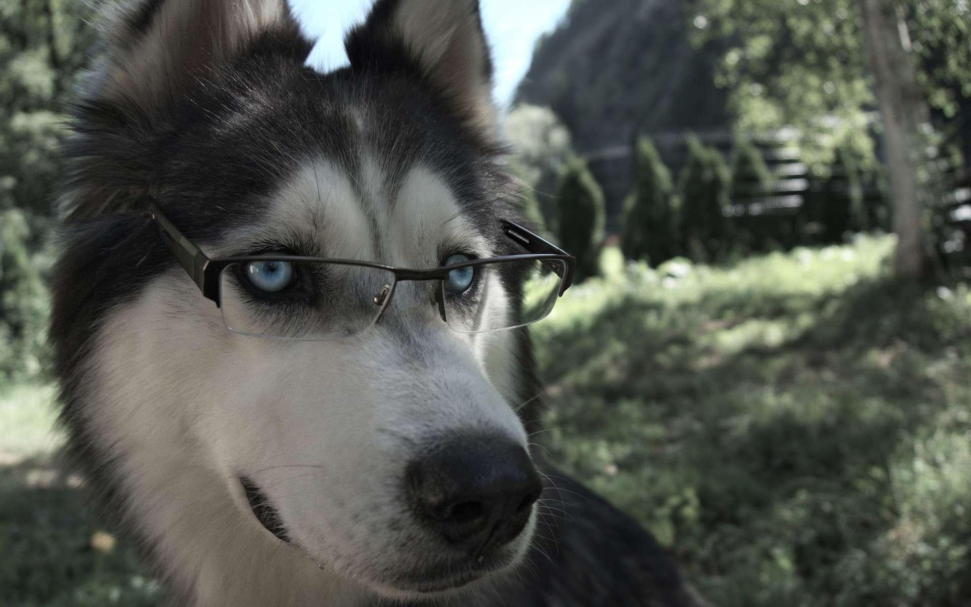 Des chercheurs de l'université de Budapest affirment que les chiens sont, tout comme les humains, capables de comprendre le sens d'un mot et de l'associer à la façon dont il est prononcé. © Arnaud Camel, Flickr, CC by 2.0