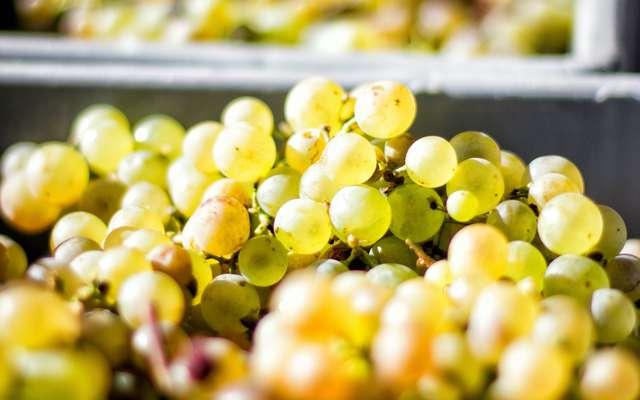 Produits de saison : quels aliments consommer en octobre ?