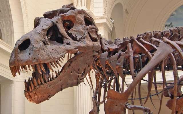 Celui qui fait peur » : découverte d'un dinosaure redoutable !