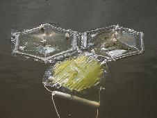 La Nasa veut fabriquer du biocarburant avec des algues