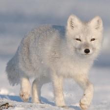 Les animaux s'adaptent au changement climatique en modifiant leur taille