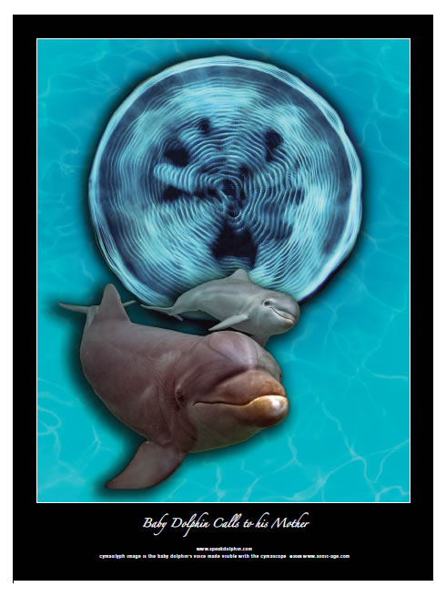 http://www.futura-sciences.com/uploads/tx_oxcsfutura/dolphinposter1.jpg