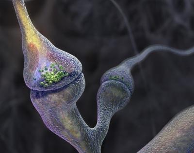 صور للخلية ـ روعة ـ Synapse3d