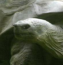 Harriet, tortue géante morte �  176 ans