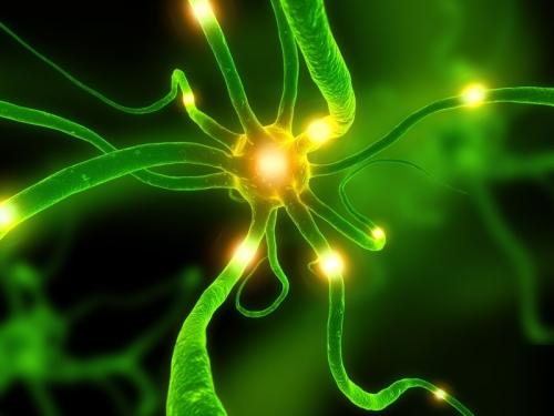 laboratoire de recherches sur le virus Ex Neurone-cerveau_dr