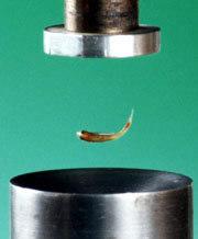 La lévitation acoustique fait voler les fourmis 061127-6a
