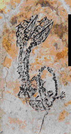 Découverte de fossile d'un reptile à deux têtes Eric_chine01