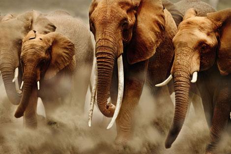 Début de la conférence mondiale sur le commerce des espèces menacées