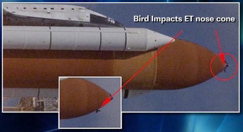 Discovery, mission accomplie mais...... Disco_bird
