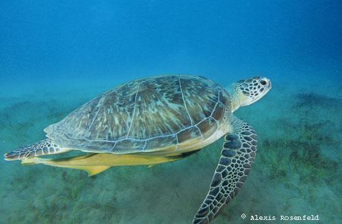 Animaux en voie de disparition at dreamuniverse voyage - Images tortue ...