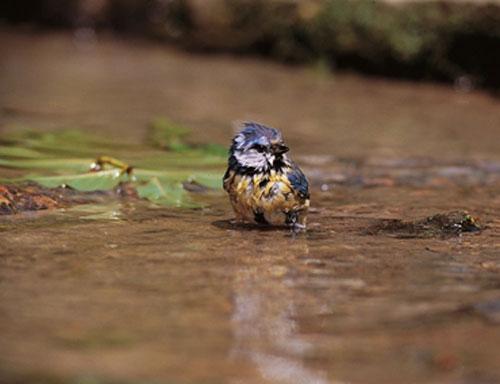Les conseils de la LPO pour les oisillons tombés du nid