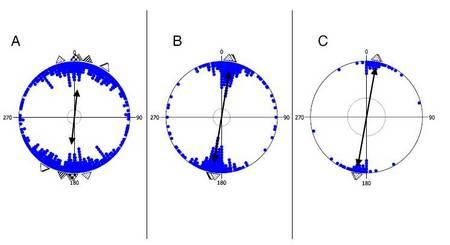 Les vaches regardent-elles vers le pôle nord magnétique ? RTEmagicC_VacheMAgnetiqueDiagramme.jpg