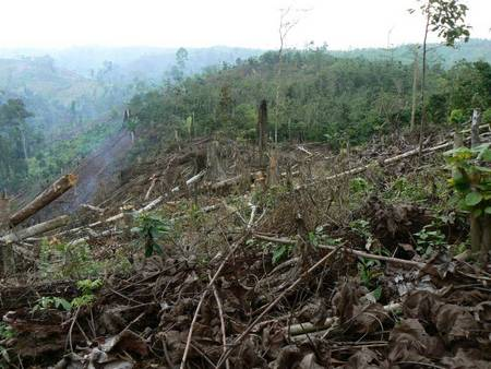 Une victoire en Indonésie contre la déforestation