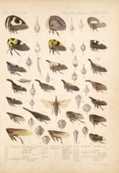 Les insectes qui ont inventé une troisième paire d'ailes