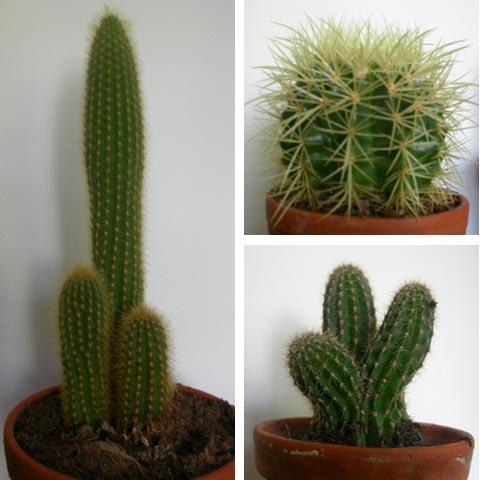 والعناية 23sec-cactus.jpg
