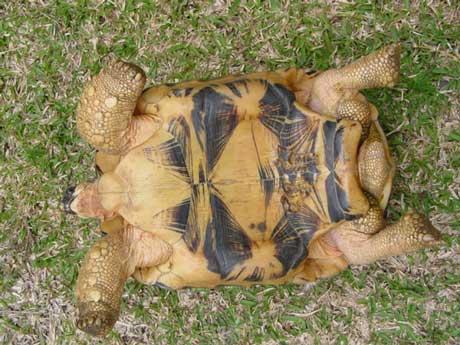 Dessin carapace de tortues - Dessin d une tortue ...