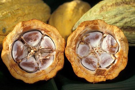 Cacao : des menaces derrière un nouvel accord international