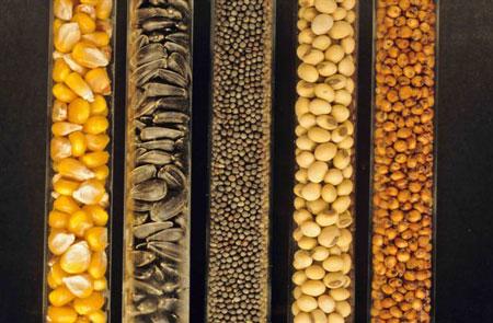 Sauvegarde de la planète : Banque de semences, une solution ?