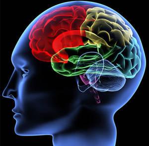 La musique aurait pu parasiter les structures du cerveau sélectionnées pour le langage.