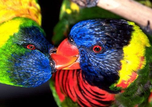 Le changement climatique pousse les oiseaux à l'infidélité et au divorce